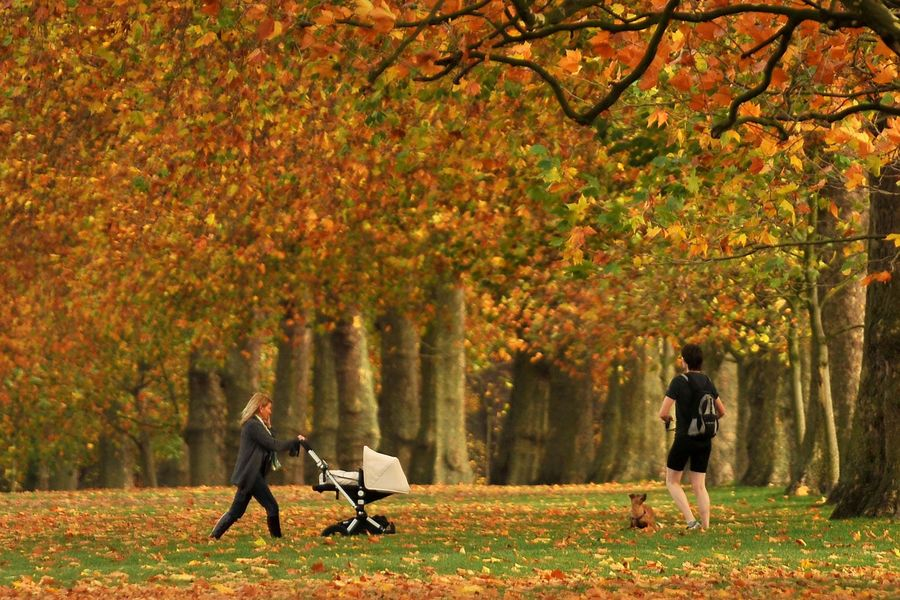 People walk through London's Hyde Park against a backdrop of autumnal colour