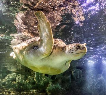 Image of Turtle at Sea Life Great Yarmouth