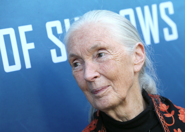 Jane Goodall appears at the Norwich Science Festival