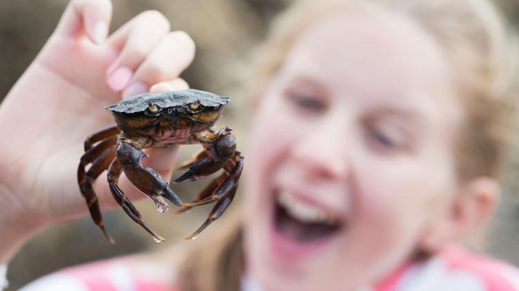 The whole family can catch crabs just off Cromer Pier