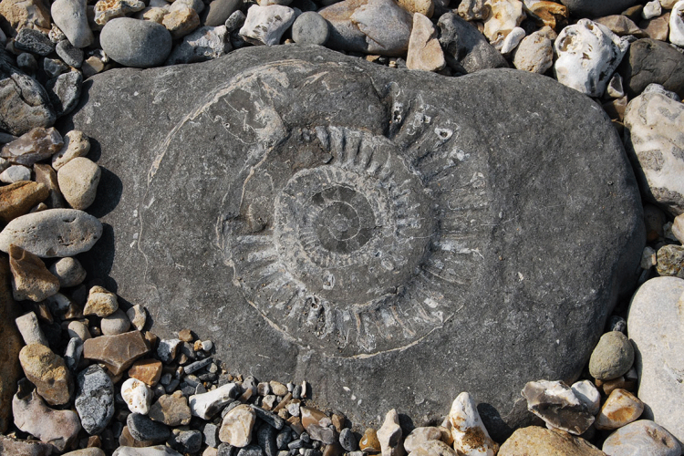 Fossil hunting in West Runton