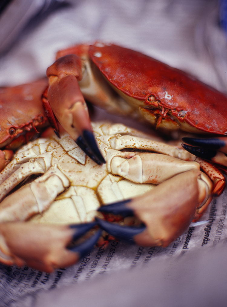 Sample Norfolk delicacy Cromer crab on the new food trail