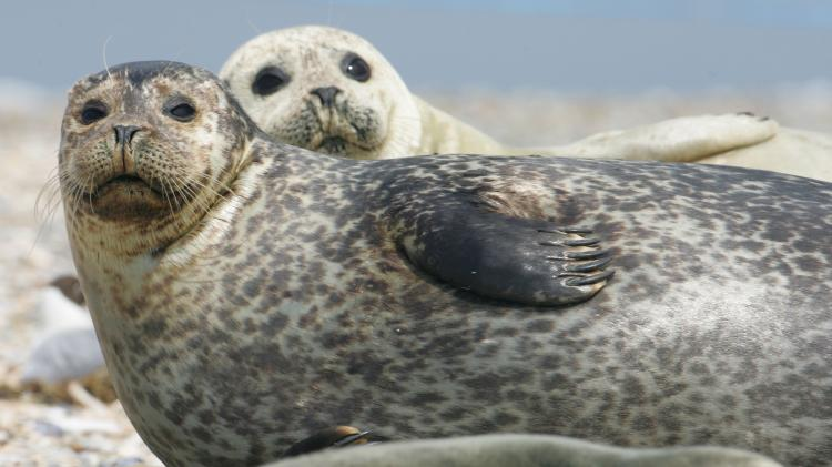 See seals in their natural habitat at the Naze