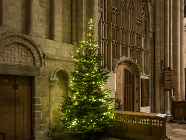Christmas tree at Norwich Cathedral