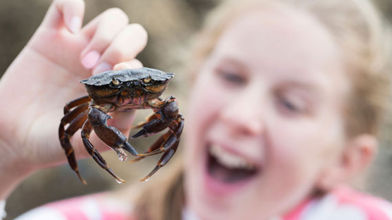 Catch a crab with the kids off Cromer Pier
