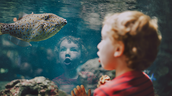 Child at aquarium